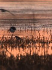 BBC Natural World – Miracle in the Marshes of Iraq – Full Documentary