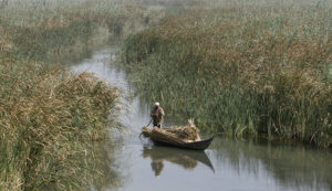 A marsh Arab man paddles a boat loaded with reeds he gathered at the Chebayesh marsh in Nassiriya, 300 km (185 miles) southeast of Baghdad July 27, 2008. Picture taken July 27, 2008. REUTERS/Saad Shalash (IRAQ) - RTR20I4M