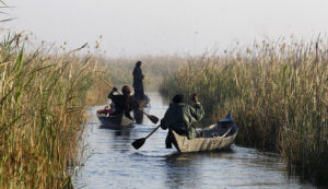 Iraqi Marsh Arab women paddle their boats at the Chebayesh marsh in Nassiriya, 300 km (185 miles) southeast of Baghdad, February 15, 2013. The Marsh Arabs who had farmed this area for thousands of years, were badly affected by a campaign mounted by the government of Saddam Hussein in the 1990s to destroy their lifestyle. The marshes were drained of water, and hundreds of thousands of Marsh Arabs were forced to flee to cities, where they live in poverty, the locals in this area said. Picture taken February 15, 2013. REUTERS/Thaier al-Sudani (IRAQ - Tags: SOCIETY) - RTR3DV6E